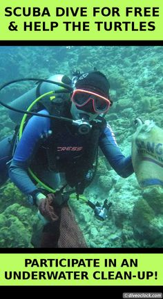 SCUBA Dive for FREE & Help the Turtles on Bonaire! Four times a year dive center Dive Friends Bonaire organizes an underwater clean-up and you can join them! - Dive o'clock! http://www.diveoclock.com/destinations/Caribbean/Bonaire_Clean-Up/ underwater   ocean   sea life   diving   coral reef    dive the world   scuba diver   dive instructor   underwater photography   duiken   tauchen   under the sea    macro   Caribbean   Dutch