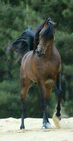 Sassy pretty dancing horse.