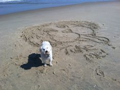 Bring your dog to the beach.  Find New Jersey Pet Friendly rentals at Shore Thing Vacation Rentals.