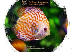 Design Agency, Branding Design, Logo Design, Graphic Design, Corporate Identity, Website, Animals, Animales, Animaux