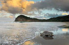 Reece Guth - Sea Turtle at Dawn