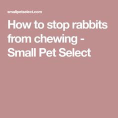 How to stop rabbits from chewing - Small Pet Select