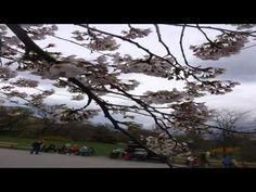 Cherry Tree Cafe Rainham Greater London - YouTube
