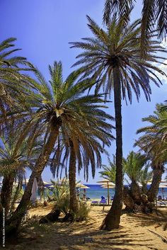 Vai in northeastern Crete. The only natural palmgrove in Europe. Crete Island, Greece Islands, Crete Greece, Athens Greece, Mykonos Greece, Beautiful Places To Visit, Beautiful Beaches, Places To Travel, Places To See