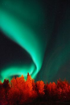 I want to see the northern lights.October Aurora Borealis in Northern Manitoba, Canada -- by Steve McDougall All Nature, Amazing Nature, Science Nature, Aurora Borealis, Beautiful Sky, Beautiful World, Belle Image Nature, Cool Pictures, Cool Photos