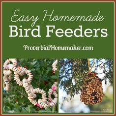 Easy Homemade Bird Feeders