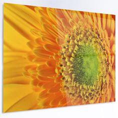"DesignArt 'Yellow Daisy Gerbera Flower Close-up' Photographic Print on Metal Size: 30"" H x 48"" W x 1"" D"