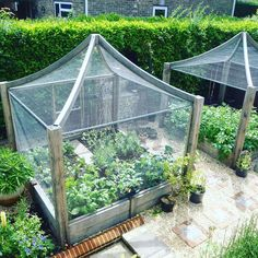 Architectural fruit cages constructed with oak. Backyard Greenhouse, Backyard Vegetable Gardens, Potager Garden, Veg Garden, Fruit Garden, Edible Garden, Wicking Garden Bed, Fruit Cage, Landscaping Shrubs