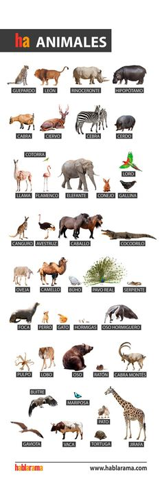animals words in spanish