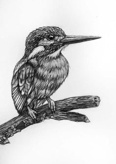 Bird Pencil Drawing  65 Kingfisher by rachelledyer on Etsy