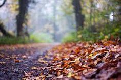 Image result for picsart background image download