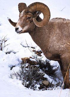 Localiza-se no estado de Alberta, distante 120 km de Calgary a 2 horas do Aeroporto Internacional de Calgary. Banff é uma reserva indígena com milhares de animais e florestas que circundam seu perímetro.