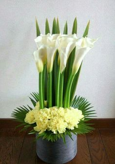 Facts on calla lily, including biology of the Calla lily plant, growing and care tips with pictures and recommended Calla lilies bouquet.