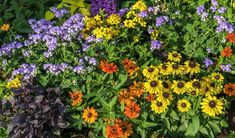 Perennial Design – Perennials Flower Beds- Évelőágy tervezés… – World of Flowers Shade Perennials, Flowers Perennials, Luxembourg Gardens, Shade Flowers, Flower Beds, Flower Designs, Gardening Tips, Fall Decor, Plants