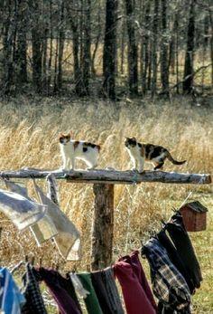 Farm Kitties.