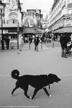 An image taken in Paris, for a hardcover coffee table book I'm printing. #Paris #Street #photography #coffee #table #book #sacre #coeur #art #print #black #white #frame #dog #pigalle www.ludgerofilipe.com