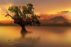 tree by iD's  on 500px
