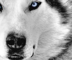 amazing-animals-wolf-wallpaper.jpg 960×800 pixels