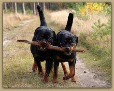 . ~ doggiechecks.com