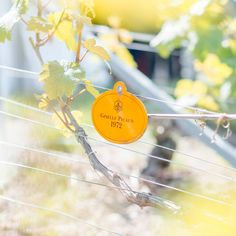#JPLVMH #VeuveClicquot © Benjamin Schmuck