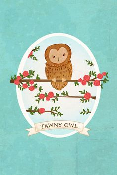 owl art print- Tawny Owl Print
