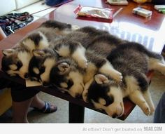 Pile of Fuzz