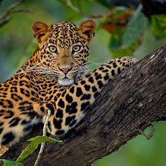 Beautifully alert cat