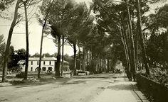 Wynberg Main Road around 1902 » cometocapetown.com