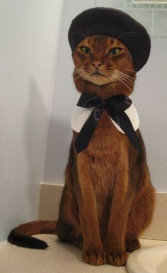 Hottest New Cat Model -Etsy's Hottest New Cat Model - French Feline Attire - The 'Cat Atelier' Gives Some Adorable Kitty Design Options (GALLERY) Related image 6 Cats That Dress Better Than You (Seriously) Cool Cats, I Love Cats, Crazy Cats, Costume Chat, Cat Costumes, Cat Dressed Up, Cat Dresses, Cat Hat, Beautiful Cats