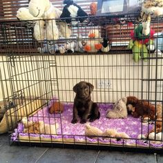 By 7 weeks we have removed the whelping box and replaced with soft beds and a crate this gets our puppies use to changes in life we don't close the door we faster bit open so they can come & go. by labradors4life
