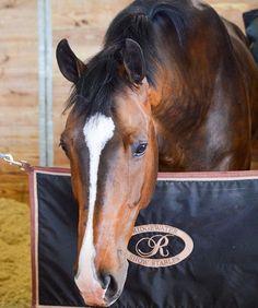 My absolute dream horse