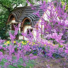 adorable cottage in spring - redbud, daffodils, grape hyacinths in bloom