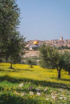 Jerusalem (Israel) by Katherine Vaterlaus 🇮🇱 Palestine History, Israel Palestine, Beautiful Mosques, Beautiful Places, Coran Quotes, Terre Promise, Places To Travel, Places To Go, Terra Santa
