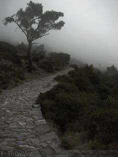Ομιχλώδες μονοπάτι προς Μοναστήρι Ζωοδόχου Πηγής στη Σάμο - Misty pathway to Zoodochos Pigi Monastery in Samos