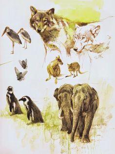 Animal sketches by Rien Poortvliet (Dutch, Animal Sketches, Art Sketches, Animal Illustrations, Watercolor Sketchbook, Wildlife Art, Creature Design, Animal Paintings, Pet Portraits, Animals And Pets