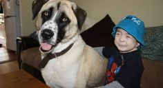 Three-legged rescue dog changes the life of boy with rare condition