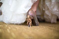 Gilttery T-Rex Dinosaur Wedding Shoes!
