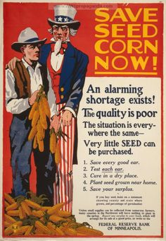 Save seed corn now!  An alarming shortage exists!  The quality is poort.  The situation is everywhere the same: very little seed can be purchased (US 1914-1918)