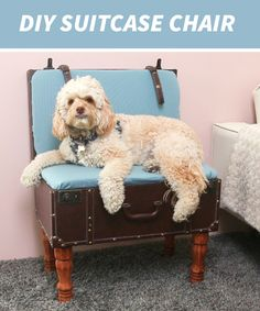Turn an old trunk into the perfect perch for guests (or, you know, your dog).
