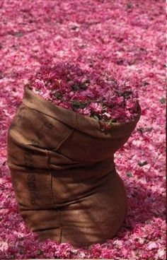 ~✿ڿڰۣ Brown and Pink Flower Power