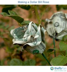This is a guide about making a dollar bill rose. Giving money as a gift is even more fun if you know how to fold money into interesting shapes.