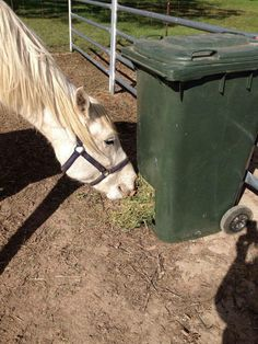 Picture of a trash can turned horse feeder! Keeps hay dry and is portable
