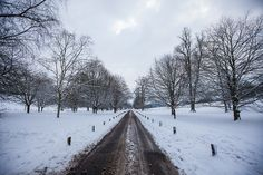 Snow in Brighton (Day Four)_11