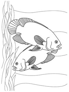 Entertaining Your Young Kid May Be Difficult But Here Is An Easy Way To Keep Him Happily Busy By Giving These Free Printable Tropical Fish Coloring Pages