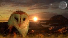 native-legend-describes-where-our-soul-goes-when-we-dream