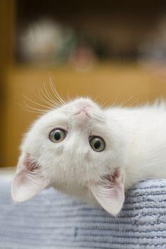 A funny cute kitten is watching you #cute #kitten #cat #cuteanimals #TheWorldIsGreat