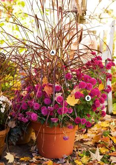 Tassled purple fountain grass adds height, texture, and just enough color to contrast with vivid magenta chrysanthemums in a simple terra-cotta pot. #fallcontainergarden #containergardenplans #fallgardening #flowerpots #bhg Fall Container Plants, Container Gardening, Flowering Kale, Fountain Grass, Flower Pots, Flowers, Autumn Garden, Terracotta Pots, Pansies