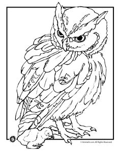 Realistic Owl Coloring Page Pages Find This Pin And More On Birds Insects Etc