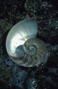 Mother of pearl builds up on the inside of shells when they are still inhabited by a living creature.