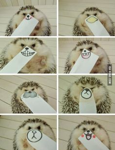 "Whats a good name for a hedgehog? I'm getting one soon, my thought was ""sting"""